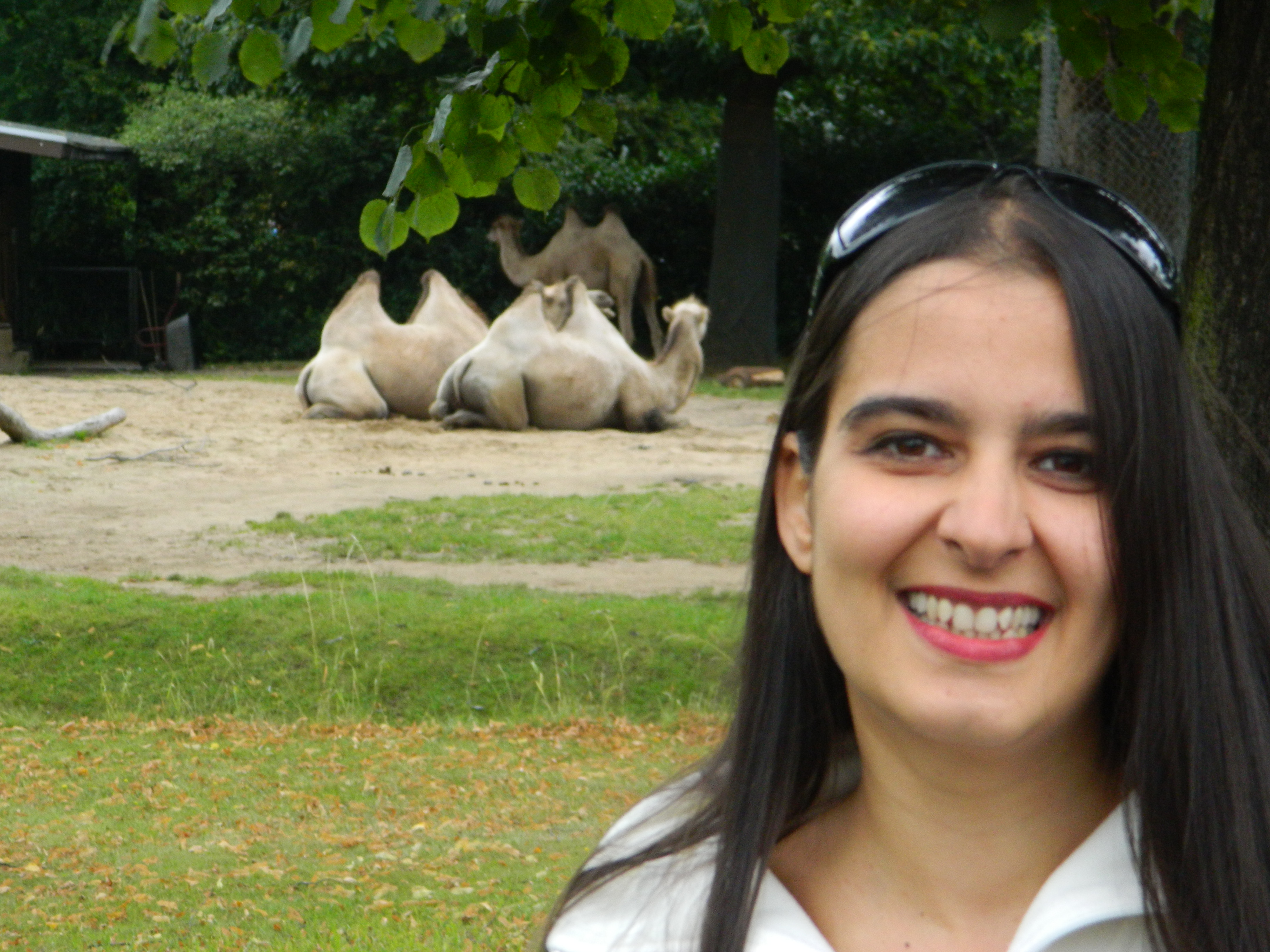 La Zoo in Koln