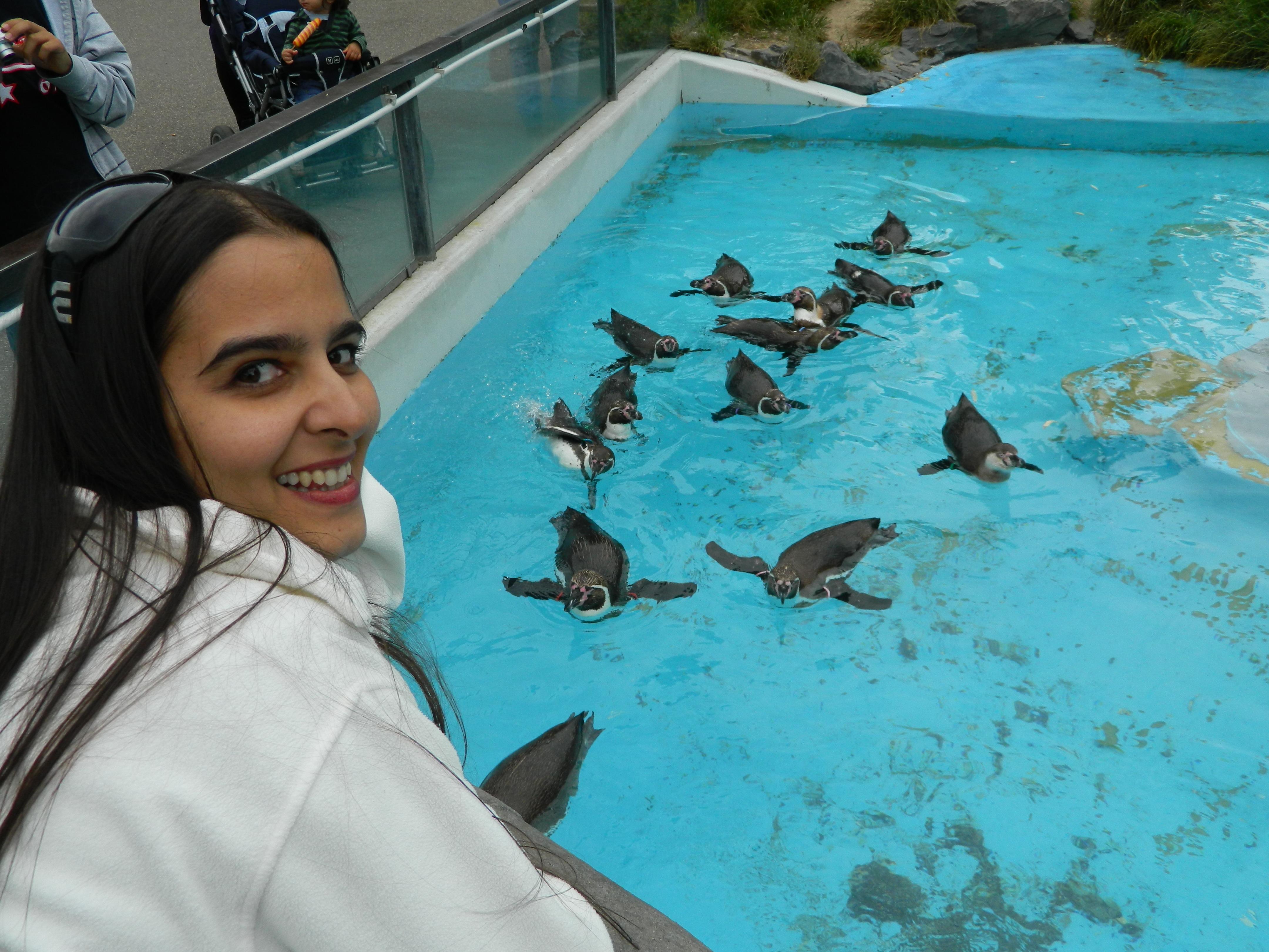 Cu pinguinii